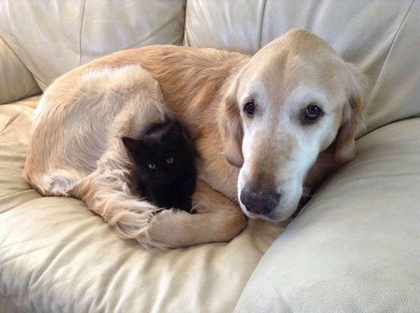 Zdjęcie przedstawia psa Forsberga i kota Maxwella tulących się do siebie