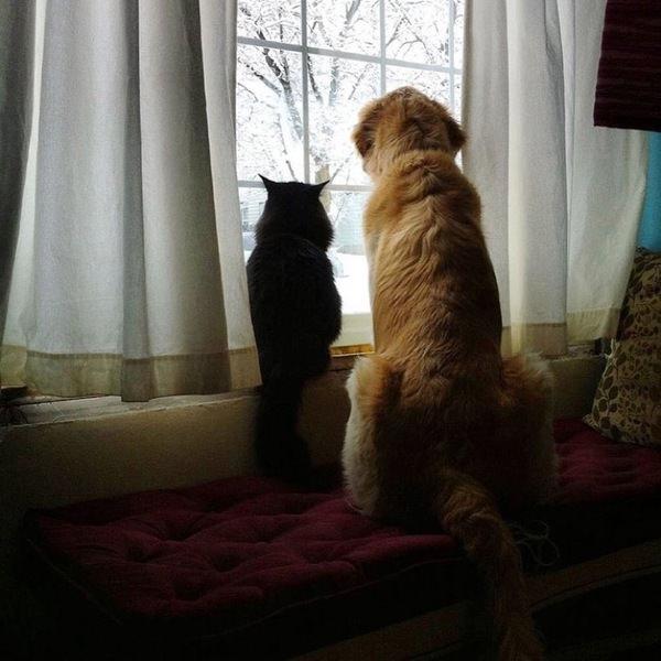 Zdjęcie przedstawia psa Forsberga i kota Maxwella siedzących wspólnie przy oknie
