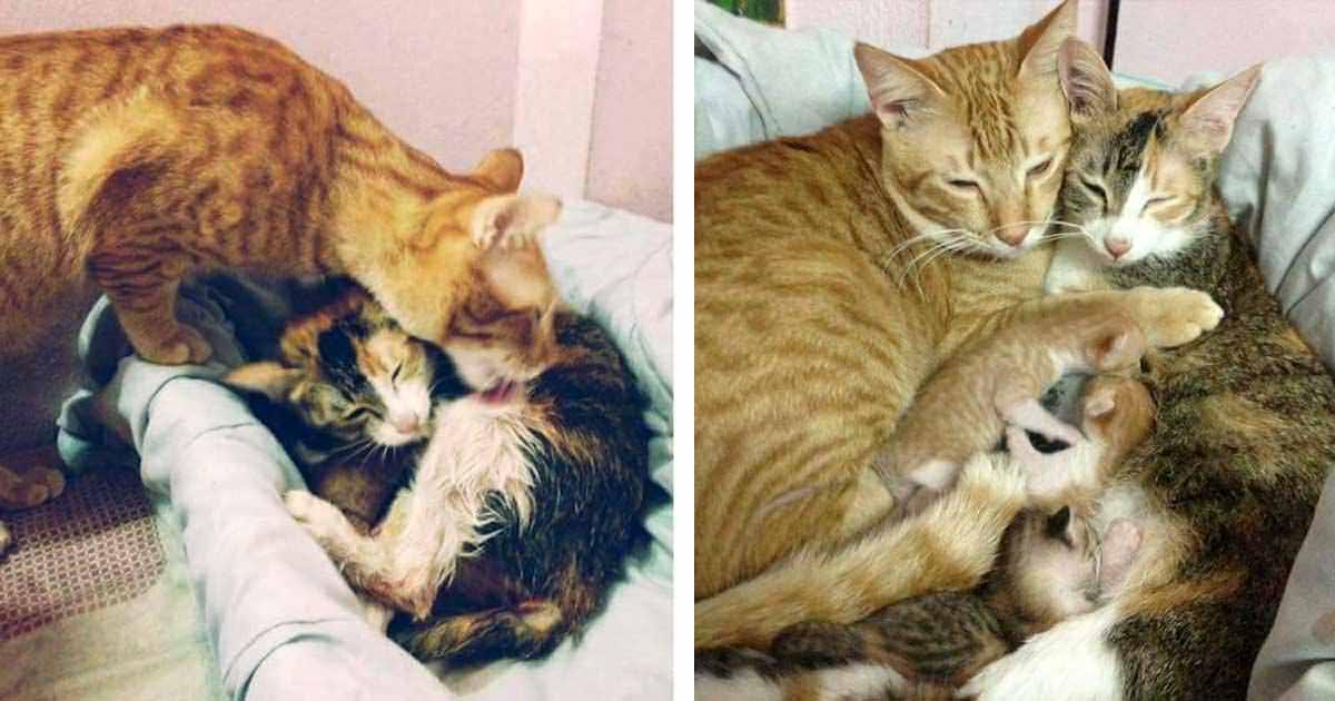 Ten tata kot nie chce opuścić swojej partnerki przy porodzie