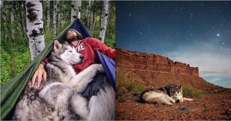 Pół-pies, pół-wilk