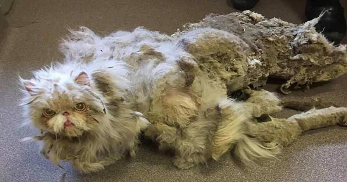 Zaniedbany kot odnaleziony w opuszczonej piwnicy