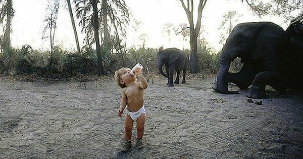 Zdjęcie przedstawia malutką Tippi, pijącą z butelki - w tle słonie