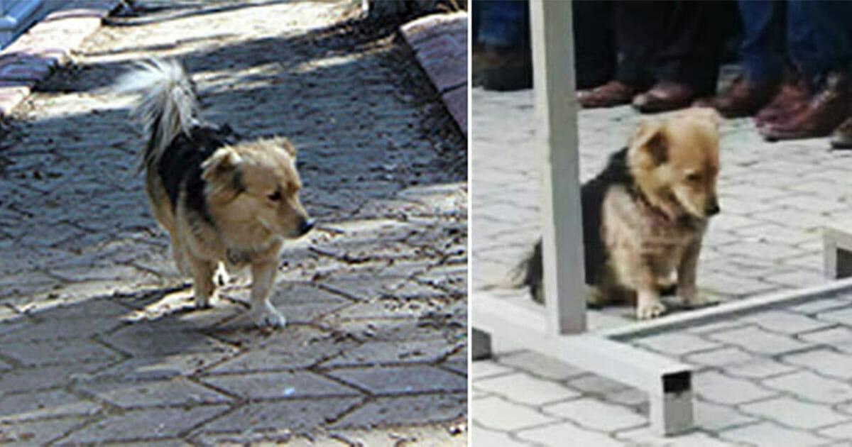 Grafika przedstawia dwa zdjęcia: po lewej pies na cmentarzu, na którym został pochowany jego właściciel, po prawej pies podczas pogrzebu swojego właściciela