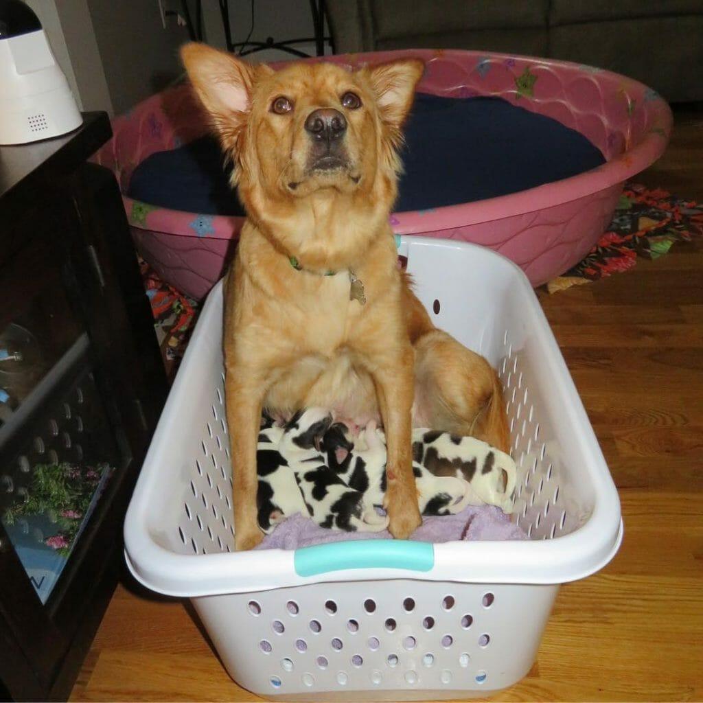 Rosie con cuccioli