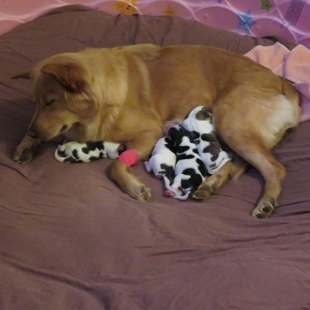 Rosie nutre i cuccioli