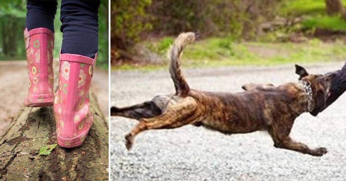 Pies ratuje dziewczynkę