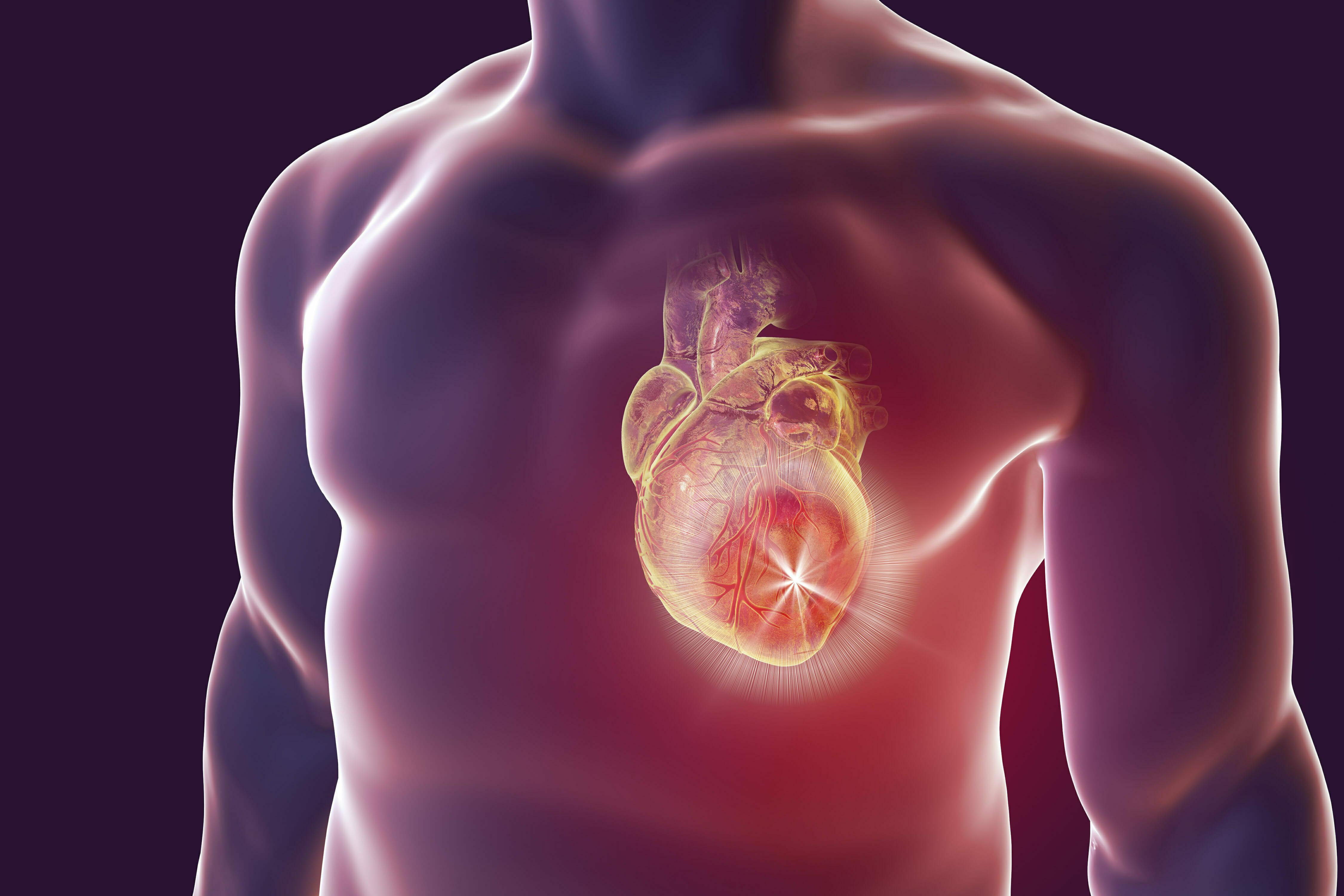 Grafika przedstawia model ciała człowieka, na którym wyraźnie zaznaczone jest serce