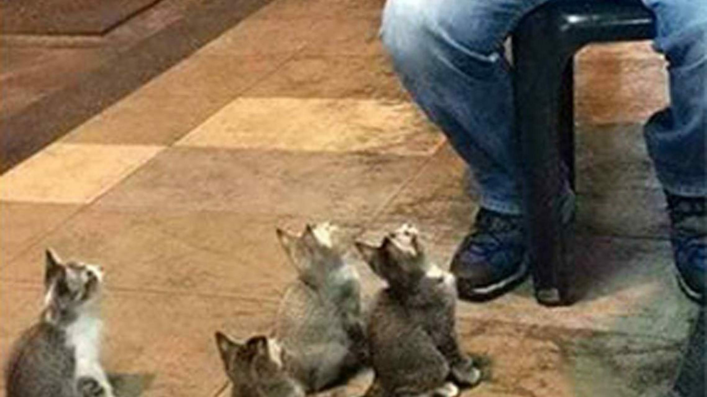 Publiczność składająca się z kotków