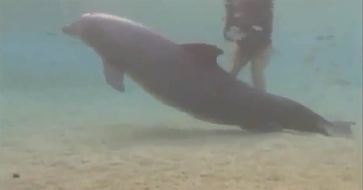 Nurkowie znaleźli dziwnie zachowującego się delfina - następnie wydarzył się cud
