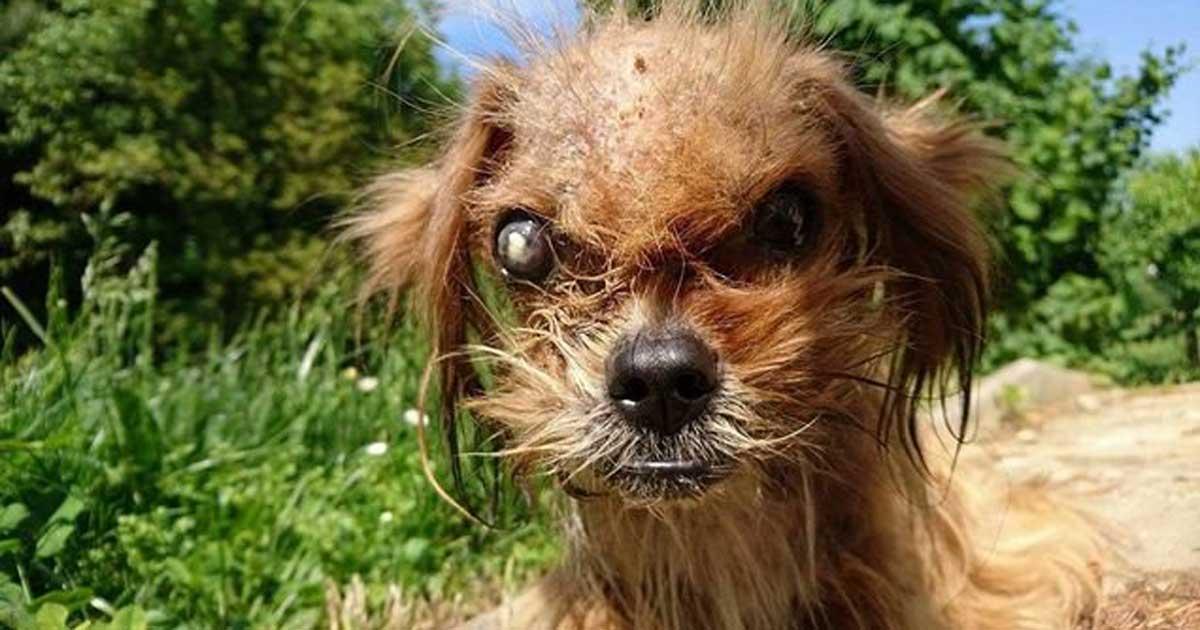 Pies Frodo otrzymał uczucie, którego potrzebował i przeszedł niesamowitą przemianę