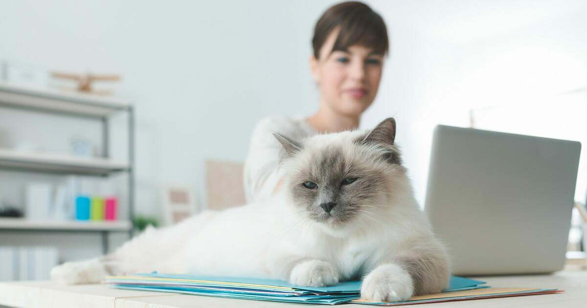 Kot na biurku