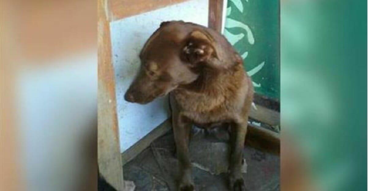 Pies z depresją spędził 2 lata samotnie w schronisku - wtedy poczuł w powietrzu znajomy zapach