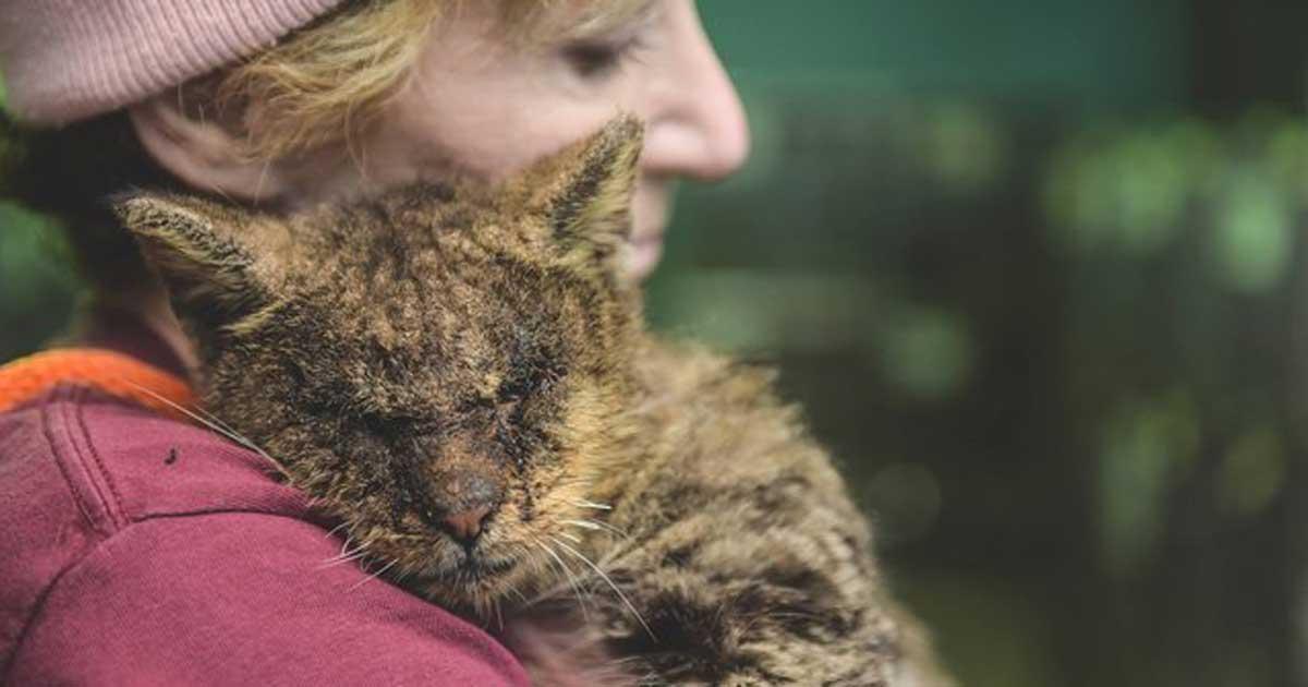 Kot Valentino został uratowany i przeszedł niesamowitą transformację
