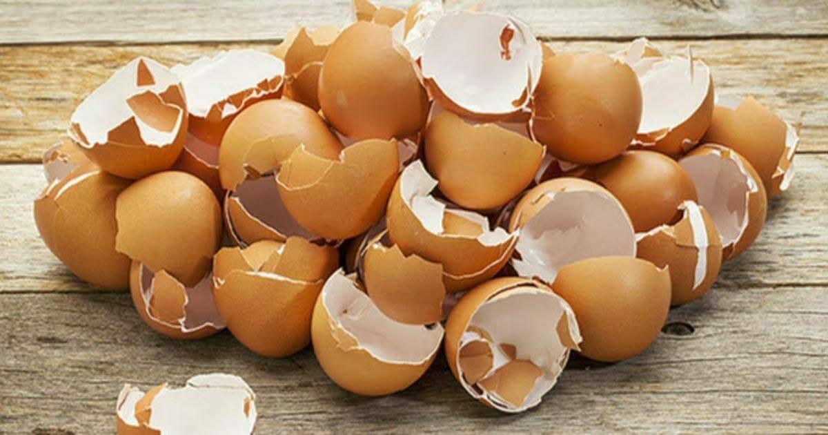 Na zdjęciu znajdują się skorupki jaj