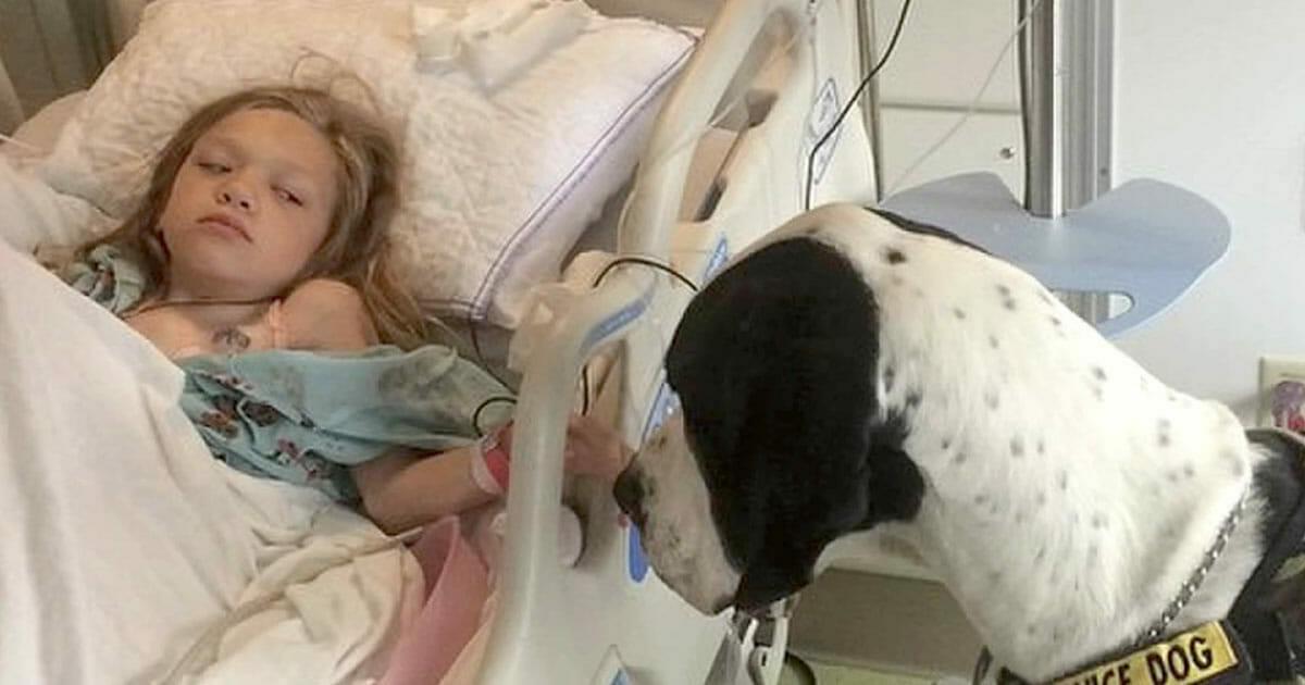 """Olbrzymi pies George pomógł dziewczynce ponownie zacząć chodzić - w ramach podziękowania zorganizowano mu """"najlepszy dzień w życiu psa"""""""