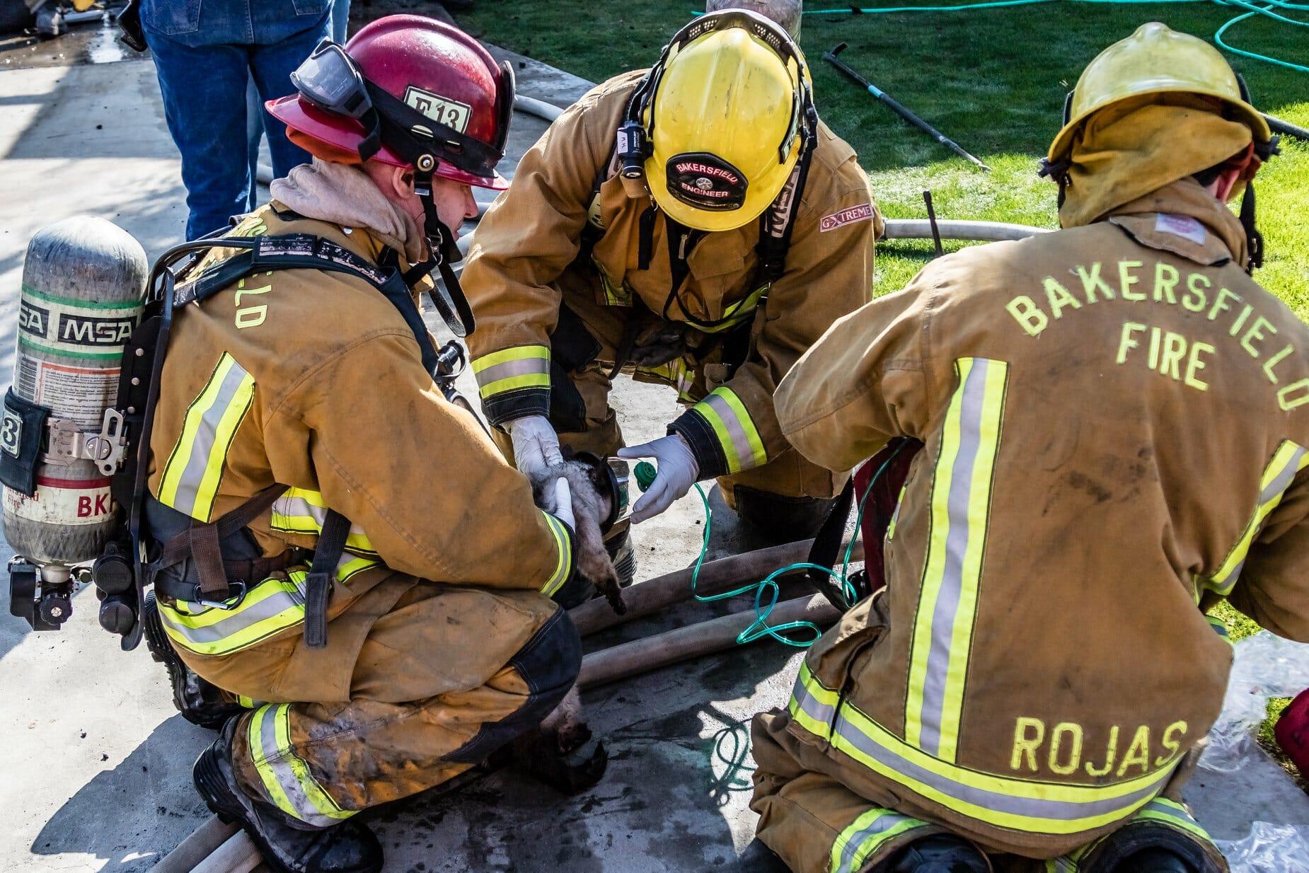 Na zdjęciu widać zastęp straży pożarnej ratujący zwierzęta ze studzienki kanalizacyjnej