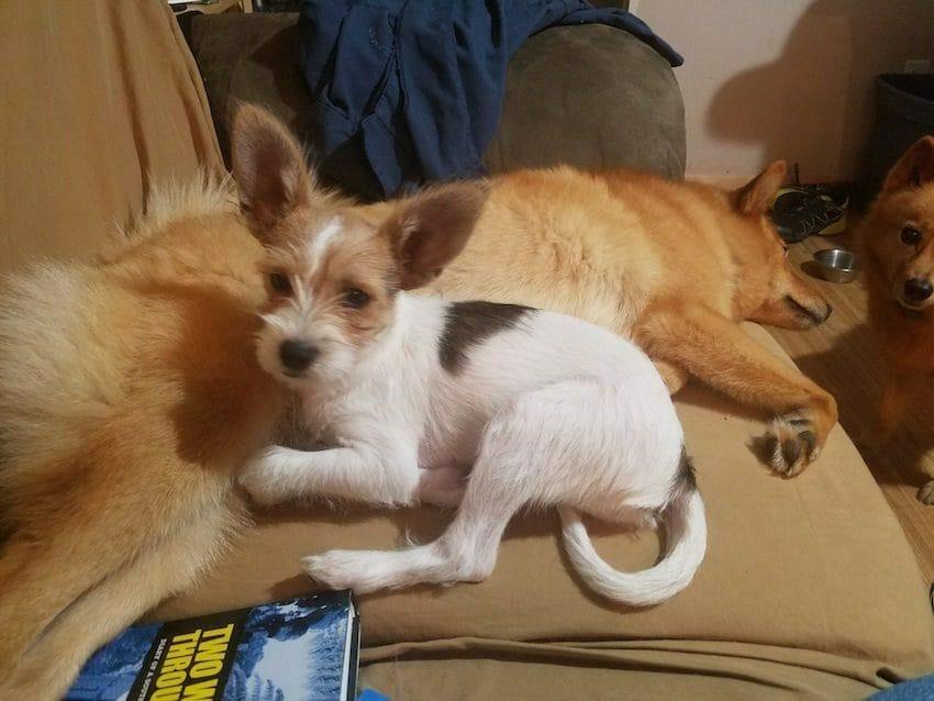 Na zdjęciu znajdują się pozostałe psy Breta