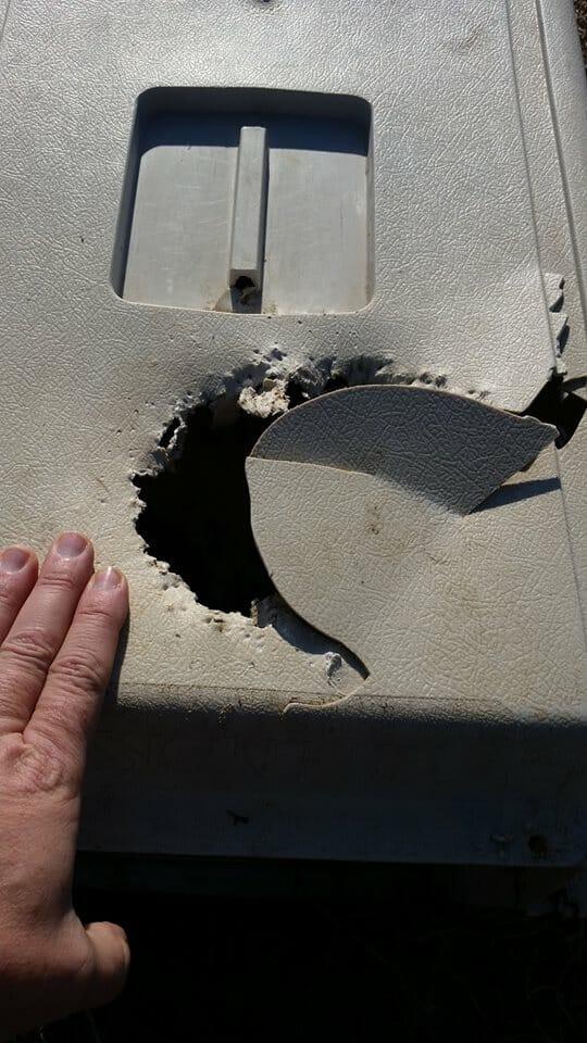 Na zdjęciu widać, jak Charlie pogryzła górną, plastikową część transportera, w którym została uwięziona