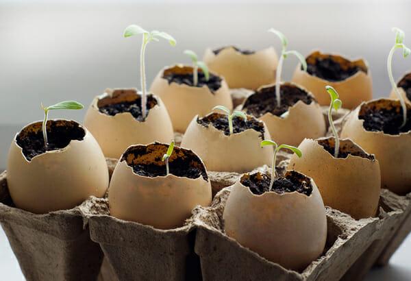Na zdjęciu widać sadzonki roślin zasadzone w skorupkach jaj