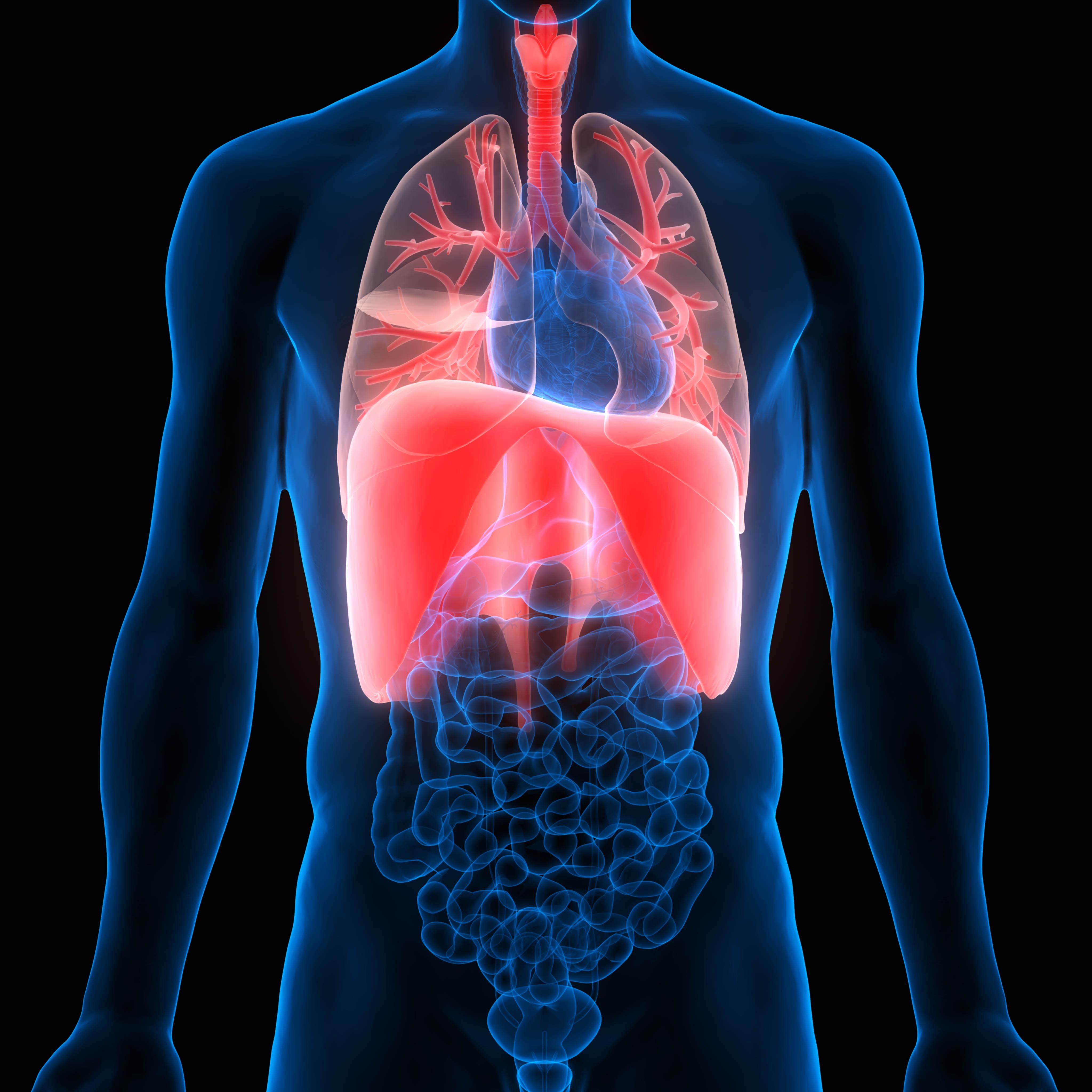 Grafika przedstawia schemat organów wewnętrznych człowieka