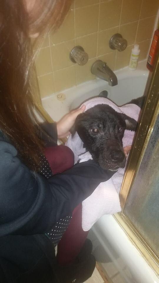 Na zdjęciu znajduje się Charlie podczas kąpieli
