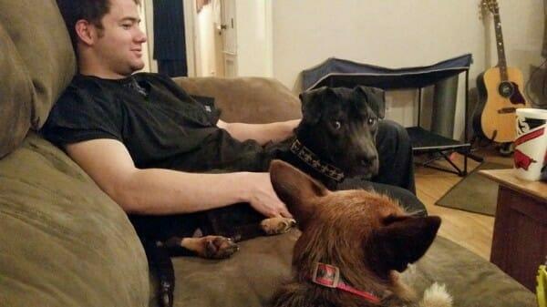 Na zdjęciu znajduje się Zach, który siedzi na kanapie z Charlie i jeszcze jednym psem
