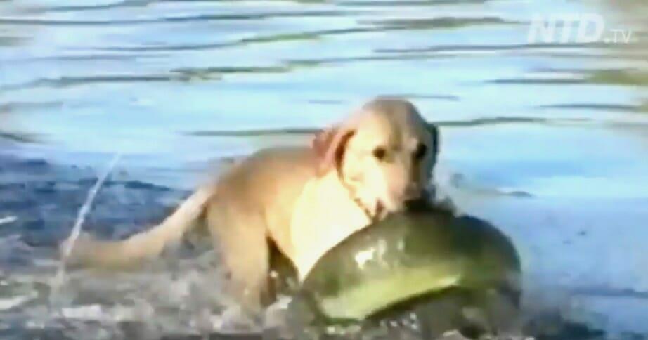 Mężczyzna zabrał psa na ryby - gdy zobaczył co jego pies wyciągnął z wody, nie mógł wyjść ze zdumienia