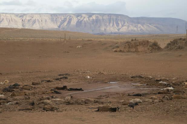 martwe konie w Arizonie
