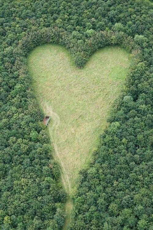 Łąka w kształcie serca widziana z lotu ptaka