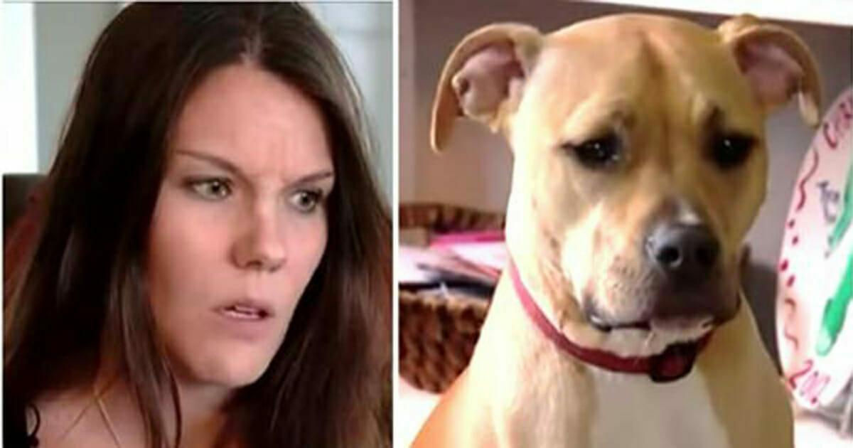 Kobietę budzi nietypowe zachowanie pitbulla - szybko orientuje się, że coś dzieje się z jej synem