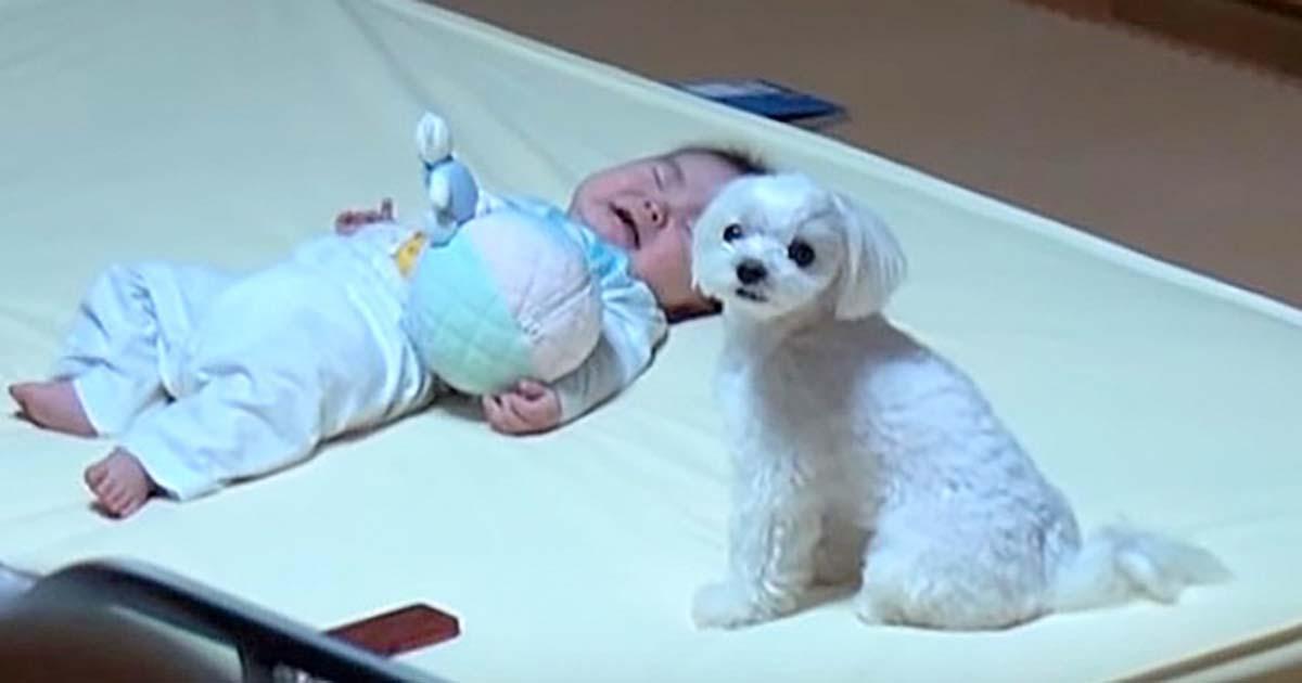 Dziecko leżące na podłodze i siedzący obok niego pies - kadr z filmu, którego dotyczy artykuł