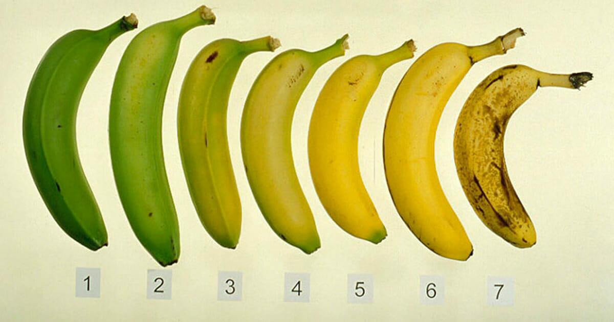 Siedem bananów, każdy w innej fazie rozwoju