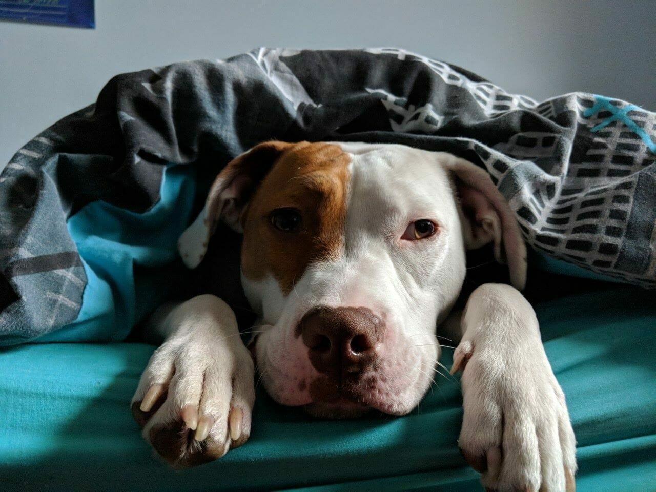Ivor leży w łóżku
