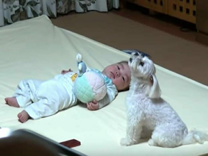 Dziecko leżące na podłodze i siedzący obok niego, wyjący pies - kadr z filmu, którego dotyczy artykuł