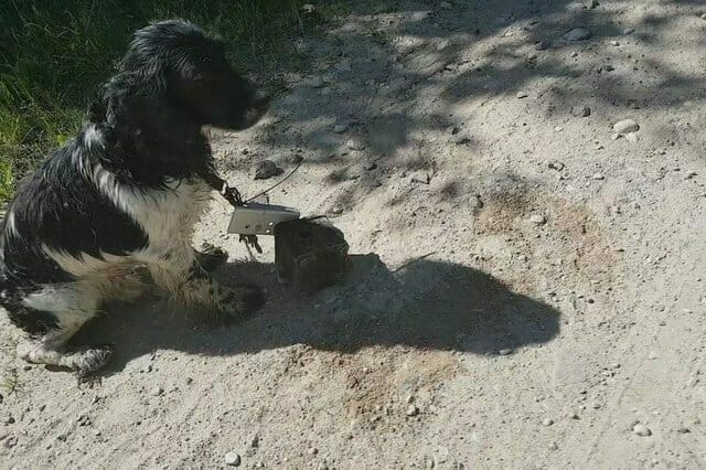 Mokry pies z ciężkim metalowym przedmiotem przywiązanym do szyi