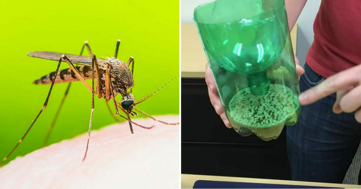 Ciesz się latem bez komarów - sprawdź genialną składającą się z 3 elementów pułapkę na komary, którą każdy może zrobić w domu