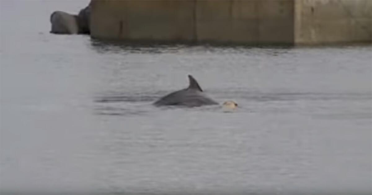 Delfin i pies podczas zabawy