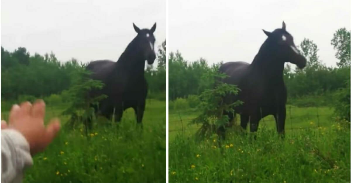 Dwa zdjęcia konia tańczącego w rytm muzyki