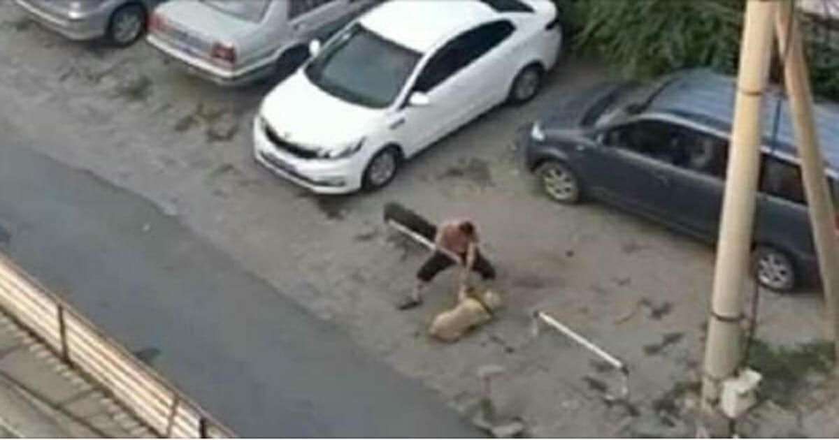Mężczyzna torturuje psy na ulicy i wykorzystuje ich cierpienie, aby wyłudzać pieniądze od miłośników zwierząt