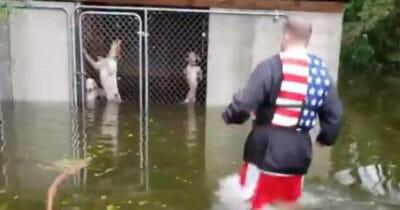 Wolontariusz ratujący psy pozostawione w kojcu na pewną śmierć podczas huraganu Florence