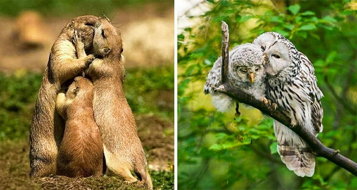19 zdjęć zakochanych zwierząt - wzruszą i wprowadzą w dobry nastrój