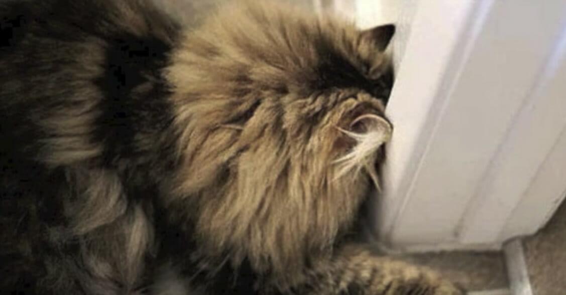 Kot opierający głowę o framugę drzwi