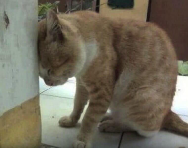 Kot opierający głowę o ścianę