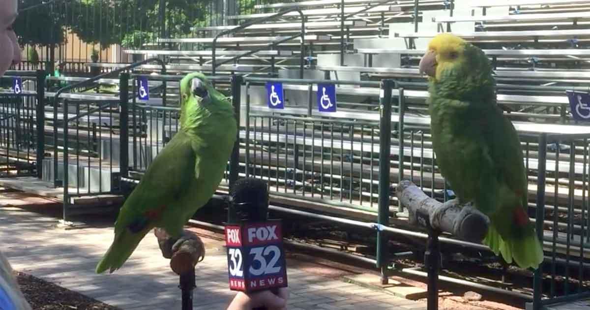Dziennikarka przeprowadza wywiad z 2. papugami - nie takiej odpowiedzi się jednak spodziewała