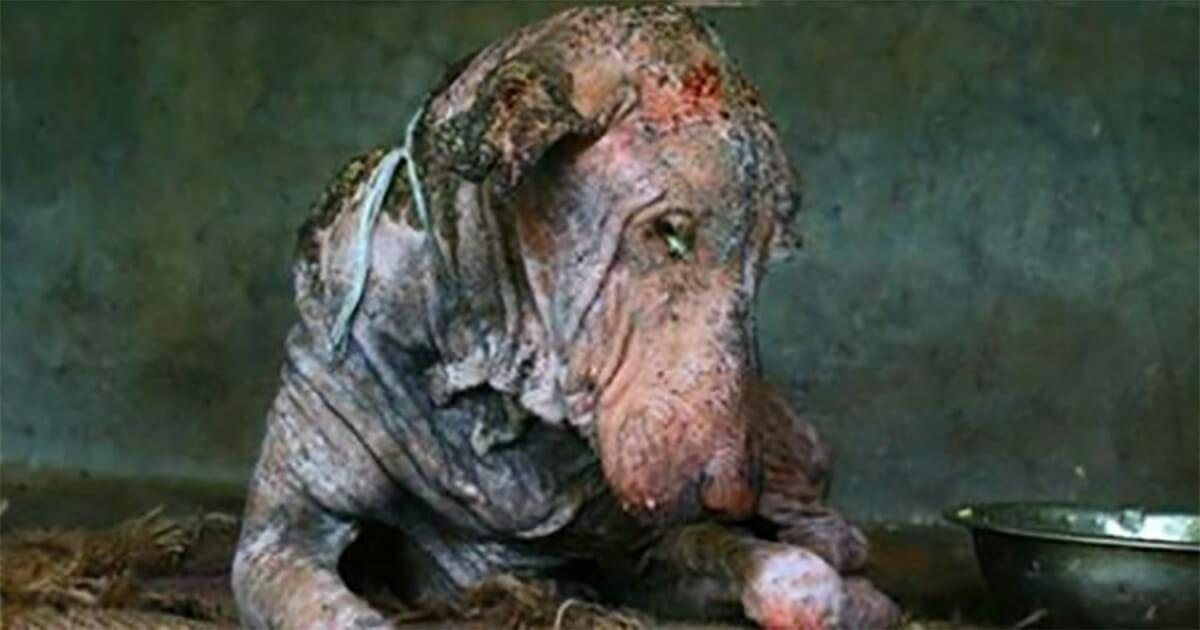 Przy drodze znaleziono umierającego psa - po 2 miesiącach zmienił się nie do poznania