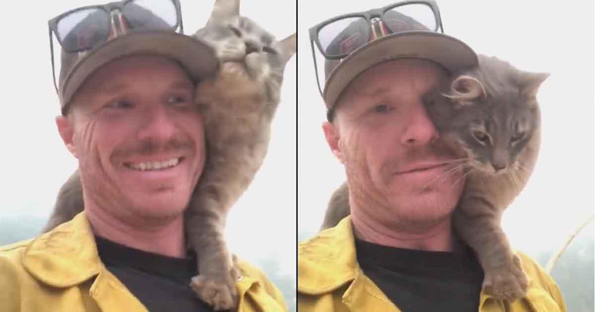 Kot nie chce odejść od swojego wybawcy - zobacz nagranie, które chwyta za serca miliony miłośników zwierząt po pożarach w Kalifornii