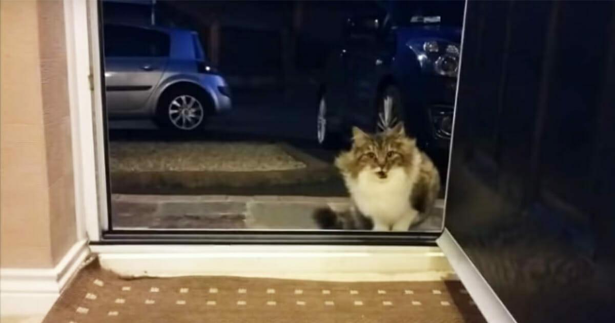 bezdomna kotka na progu domu