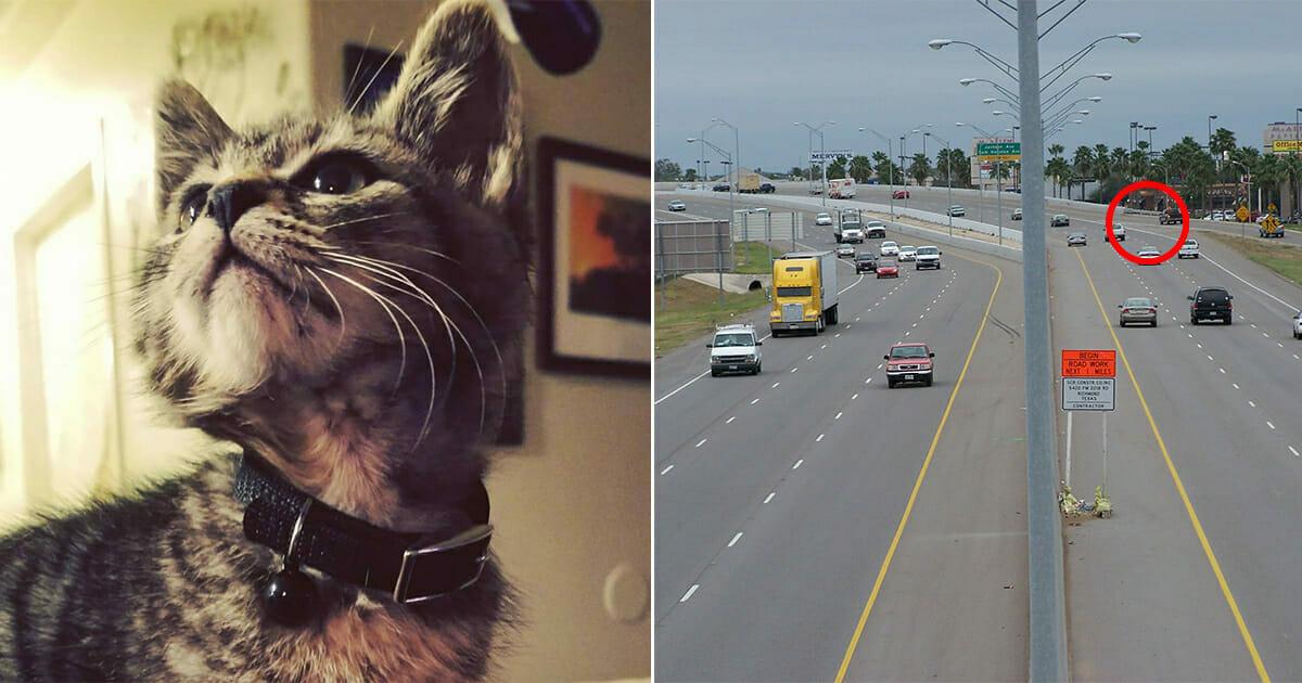 Kierowca spostrzegł na ruchliwej drodze kota - ktoś przykleił jego łapy do jezdni