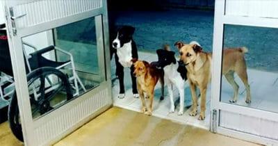 Cztery psy czekające na progu szpitala