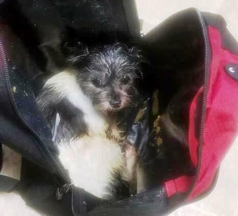 Pies w plecaku
